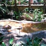 Flamingos from Animal Encounter