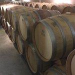 Wine being aged in oak barrels