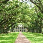 Avenue of Oaks, Beautiful!