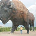 That's one BIG buffalo!