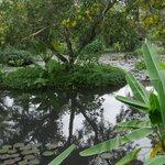 lagoon near breakfast area