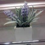 Flower in bathroom
