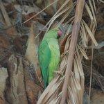 Papugi na basenie