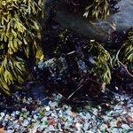 Sea Glass and seaweed