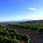 vineyards up hill La Guardai at San Pau d'Ordals