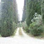 Il viale di ingresso con i cipressi