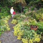 charmig bortglömd trädgård