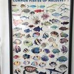 Peces del arrecife