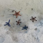 star fishes you can find in bulabog beach