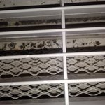 mold in ac/heating unit