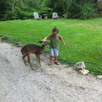 Playing with the deer on arrival