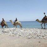Sahara Beach Camp Foto