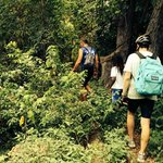 Jungle Detour