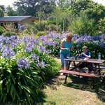 un jardin d'autochtone qui sert de la petite restauration