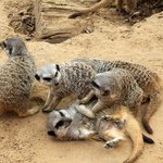 Зоопарк Фригия