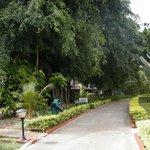 vialetti nel giardino