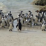 Penguins at Water's Edge