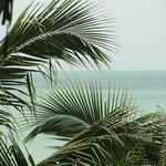 una vista muy linda, entre las palmeras puede divisarse el mar.
