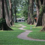 Part of the extensive gardens; some of these trees have hammocks between them