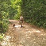 lily ponds woodland walk