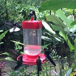 Hummingbirds at reception area