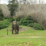 Ramesh Jain at Bandipur National park...