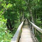 boardwalk along Blue Springs run