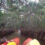 Entering mangrove