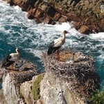 Stork nests in the cliffs