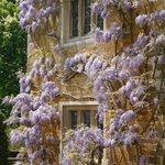 at Coton Manor Gardens