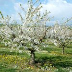 Endless orchards within minutes walking distance