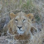 Great game viewing including wonderful lion sighting