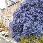 Bluebell House's namesake flowers