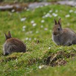 In May … lots of rabbits on the way up
