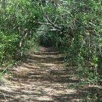 Elliott Key trail