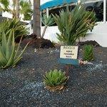 Plantas Internacionais
