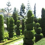 Incredible topiary