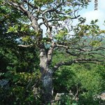 Tree at a rocky overlook