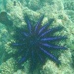 Mergulho no entorno da ilha