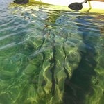 See the shipwrecks with our clear-bottom kayaks!