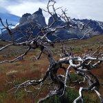 """Natureza """"morta"""", resultado do incêndio florestal de 2009"""