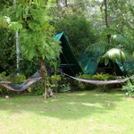 Hammocks on the property