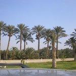 A caminho de Saqqara