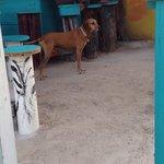 Bar dog!!  He rocks.