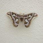 Jungle Moth