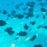 snorkeling!!!