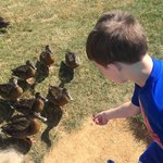 Feeding ducks at the pond