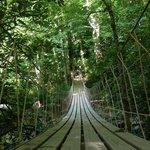 Swinging bridge on nature trail