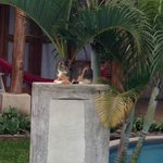 Cat guardian