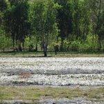 Wetlands at Nourlangie